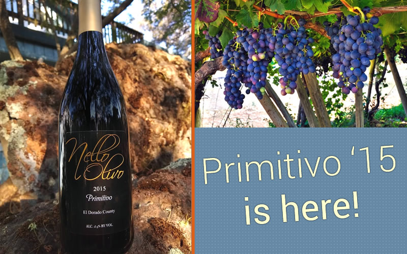 Olivo's 2015 Primitivo is here.